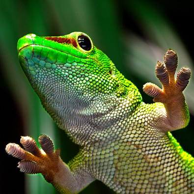 Gecko-Effekt UV-Direktdruck Hamburg