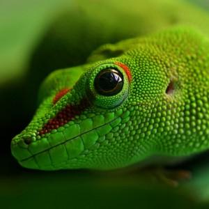 Digitaldruck Hamburg Entwicklung Gecko